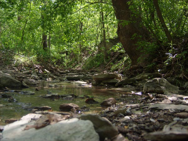unnamed tributary at kane woods
