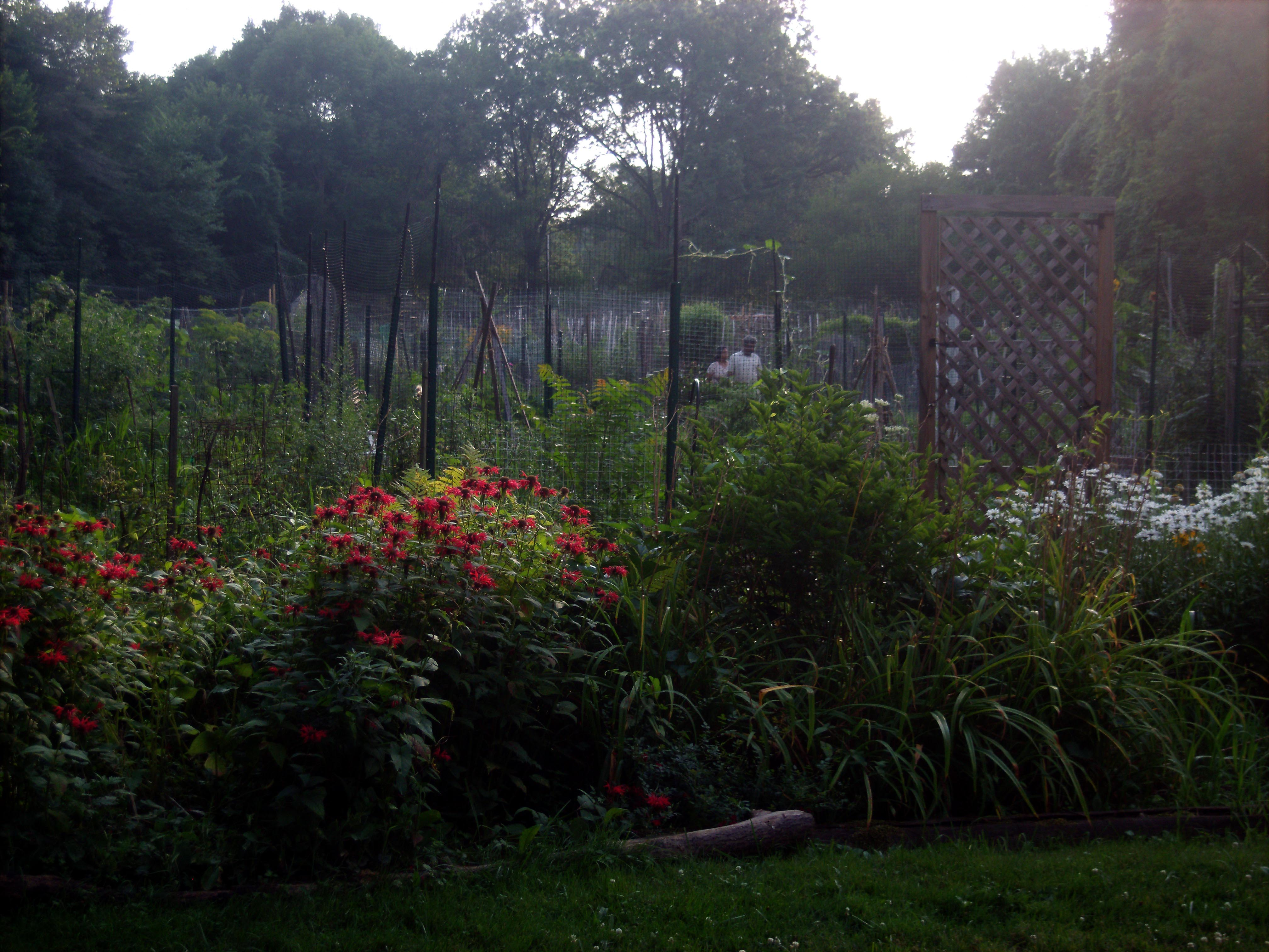 public garden plots