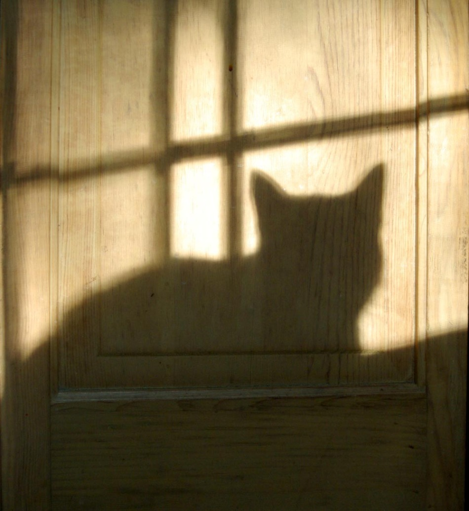 shadow of cat on door