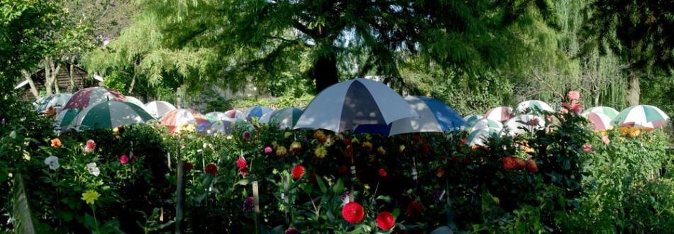 umbrellas in a garden