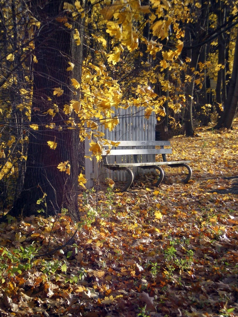 bench with yellow leaves
