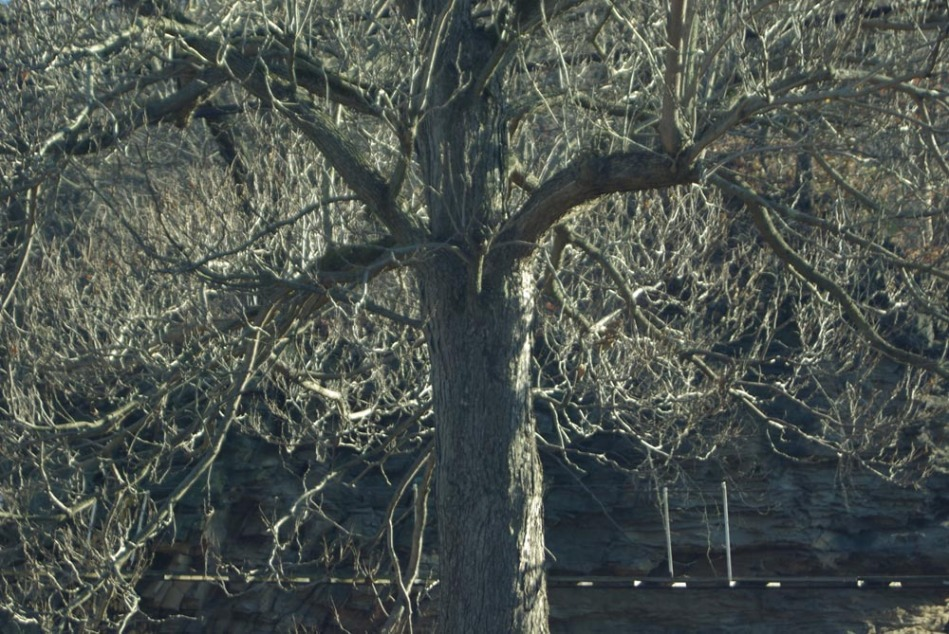 bare tree in sunlight