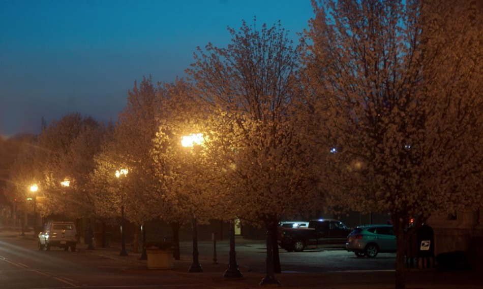 Pear Trees at Night