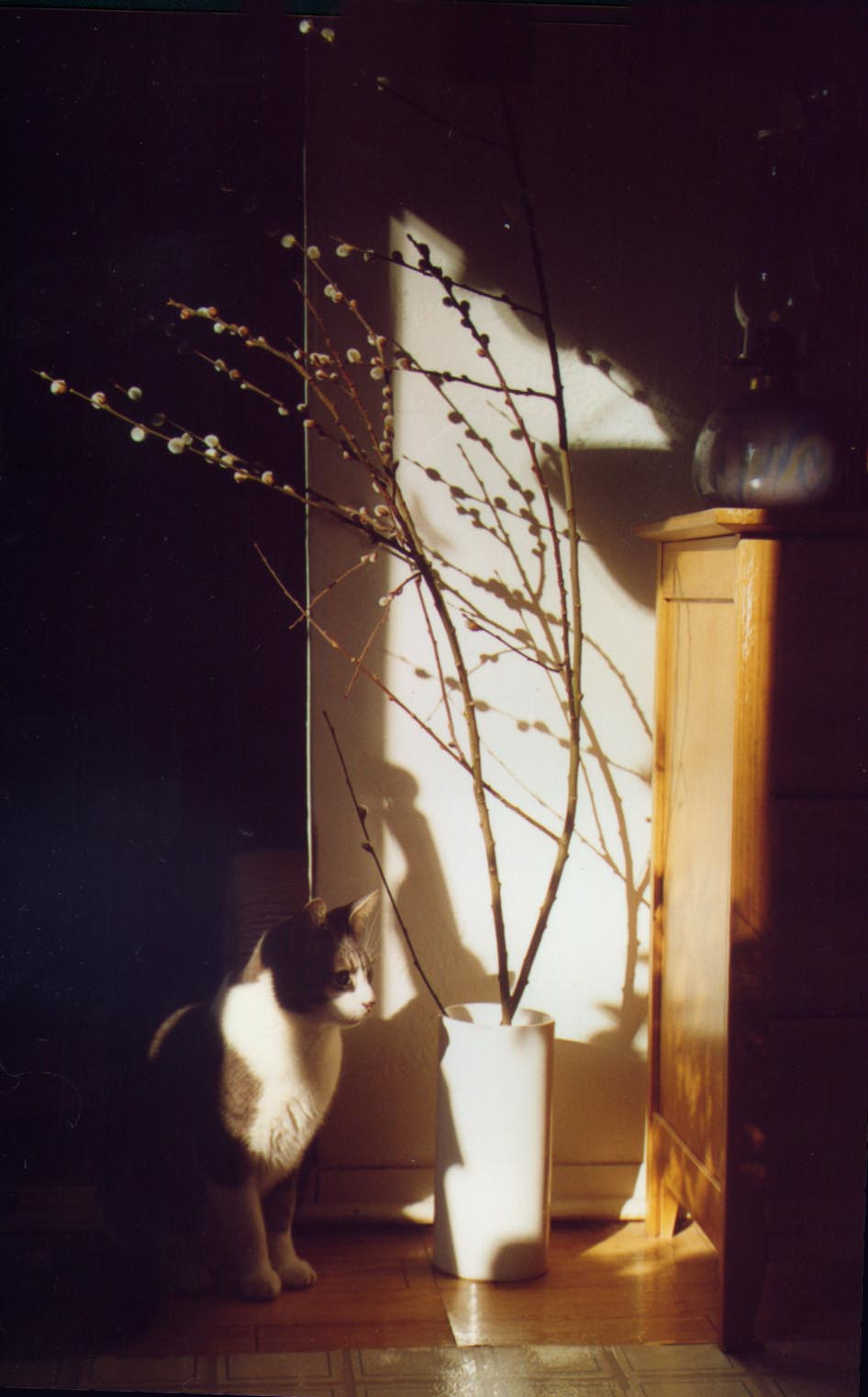 photo of a cat and pussy willow in angled sunlight