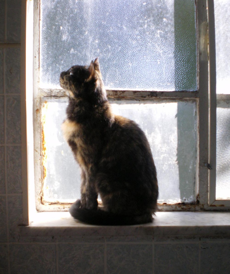 tortoiseshell cat on windowsill