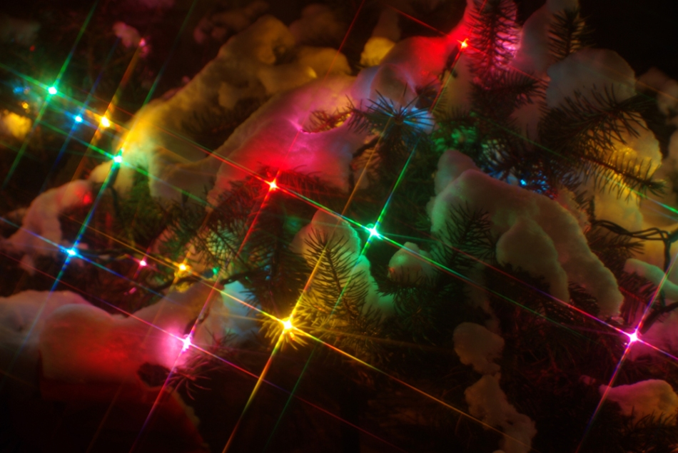 photo of christmas lights in snowy pine