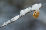snow balanced on twig