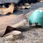 robin egg on pavement